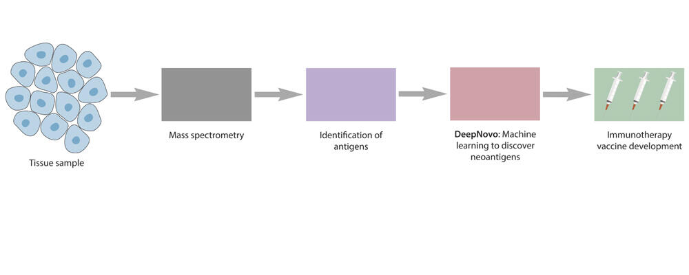image depicting workflow to discover neoantigens to develop cancer vaccines (view larger figure).