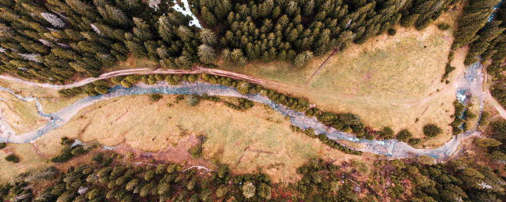 drone photo of a forest